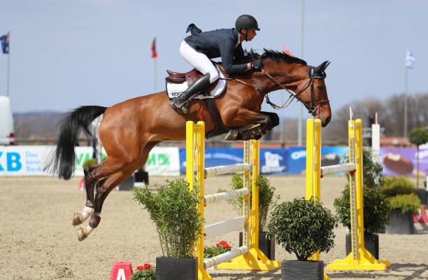 DEU: International Horse Show - Horses And Dreams