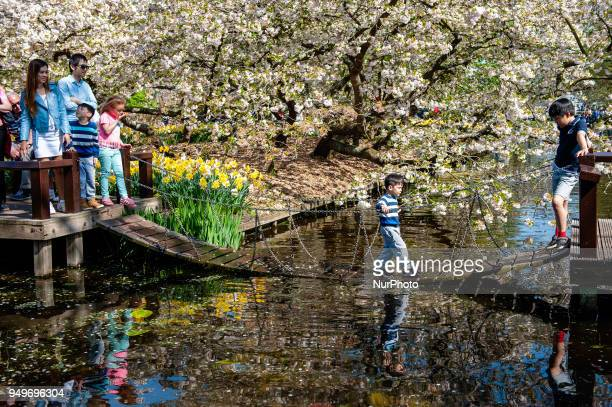 April 21st Lisse Keukenhof is also known as the Garden of Europe one of the world's largest flower gardens and is situated in Lisse The Netherlands...