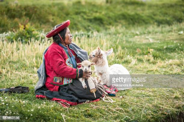 april 22, 2014. saqsaywaman ruins near cusco, peru. indigenous woman sitting in the medow with a llama and its baby. she is wearing colorful traditional clothing and spinning wool. - istock stock-fotos und bilder