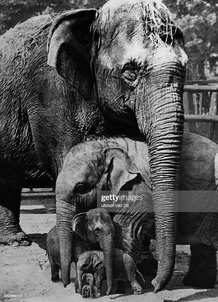 April fool hoax: Elephants Eight generations of elephants (photomontage) - 1932 - Photographer: Seidenstuecker - Published by: 'Uhu' 7/1932 Vintage property of ullstein bild : News Photo