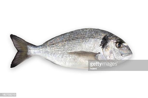 Aqua culture sea bream (with clipping path)