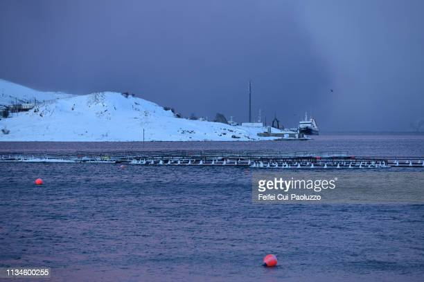 aquaculture cage for salmon at fjord of båtsfjord, finnmark county, norway. - 大西洋 ストックフォトと画像