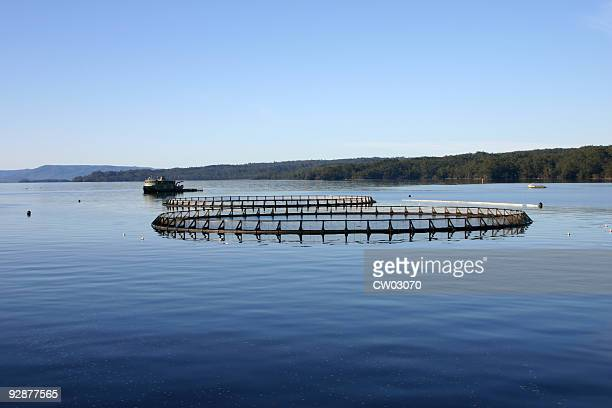 Aquaculture system on a calm and still lake