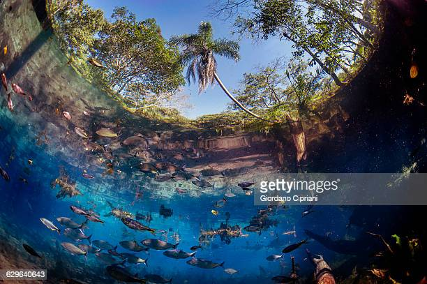 aquario natural, brazil - mato grosso do sul state stock pictures, royalty-free photos & images
