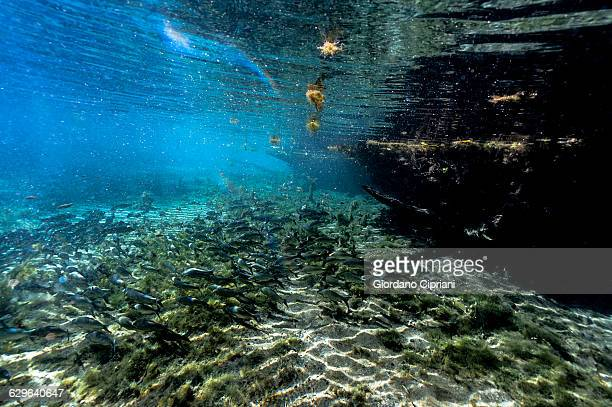 aquario natural - mato grosso do sul state stock pictures, royalty-free photos & images