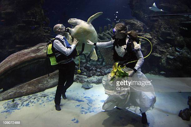 Aquarists Kathryn O'Connor and James Oliver fend off a giant green sea turtle as they part in a blessing on Valentine's Day in the Ocean Reef Display...