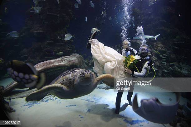 Aquarists Kathryn O'Connor and James Oliver take part in a blessing on Valentine's Day in the Ocean Reef Display in the London Aquarium on February...
