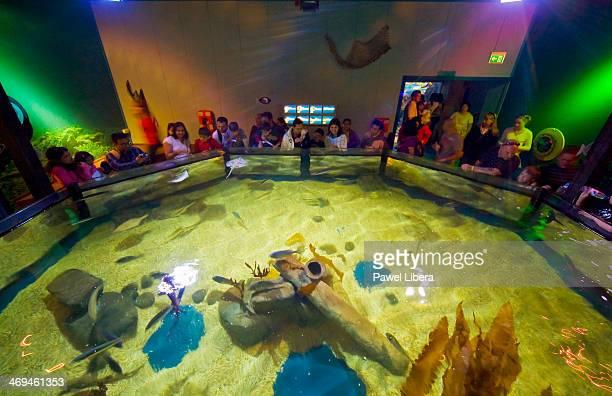 Aquarium at the Sea Life Centre at Chessington World of Adventures.