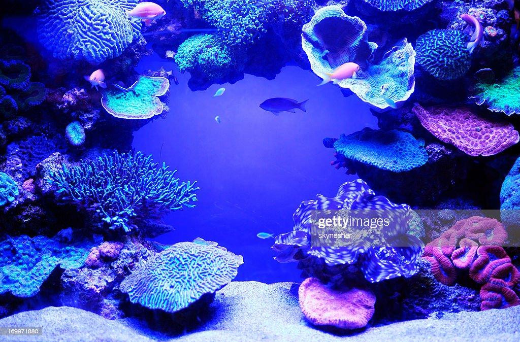 Aquarium fish. : Stock Photo