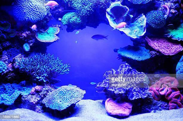 aquarium fish. - cnidarian stock photos and pictures