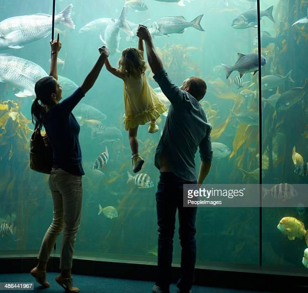 Aquarium de loisirs