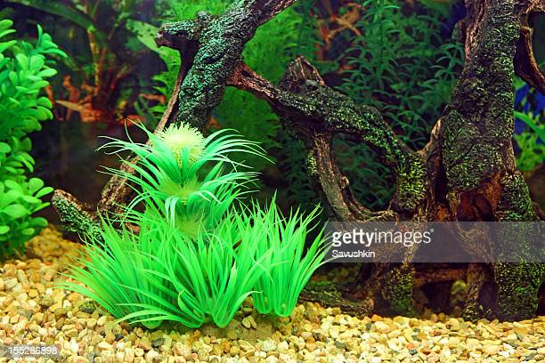 acquario aquarium - pianta acquatica foto e immagini stock