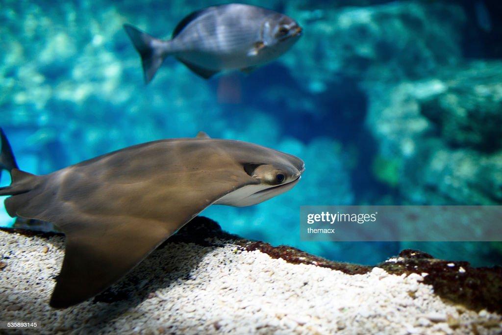 Aquarium : Stockfoto