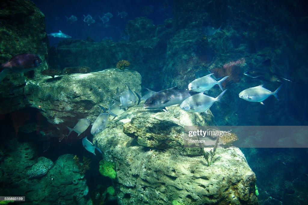 - Aquarium : Stock-Foto