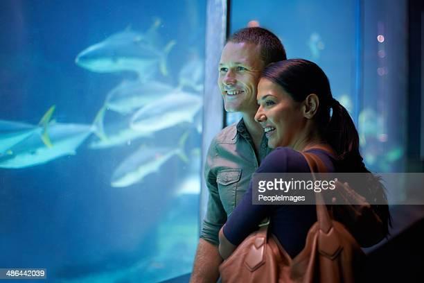 aquatic affection - fish love stockfoto's en -beelden