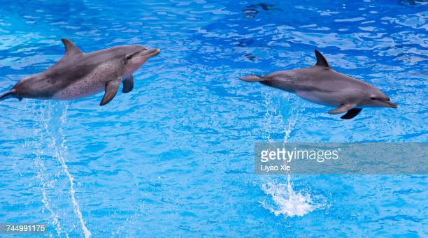 aquatic animals  - liyao xie stock pictures, royalty-free photos & images