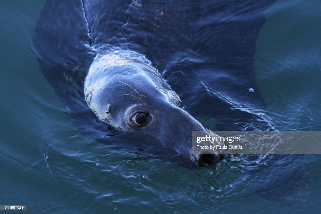 Aquatic Animals  : Stock-Foto