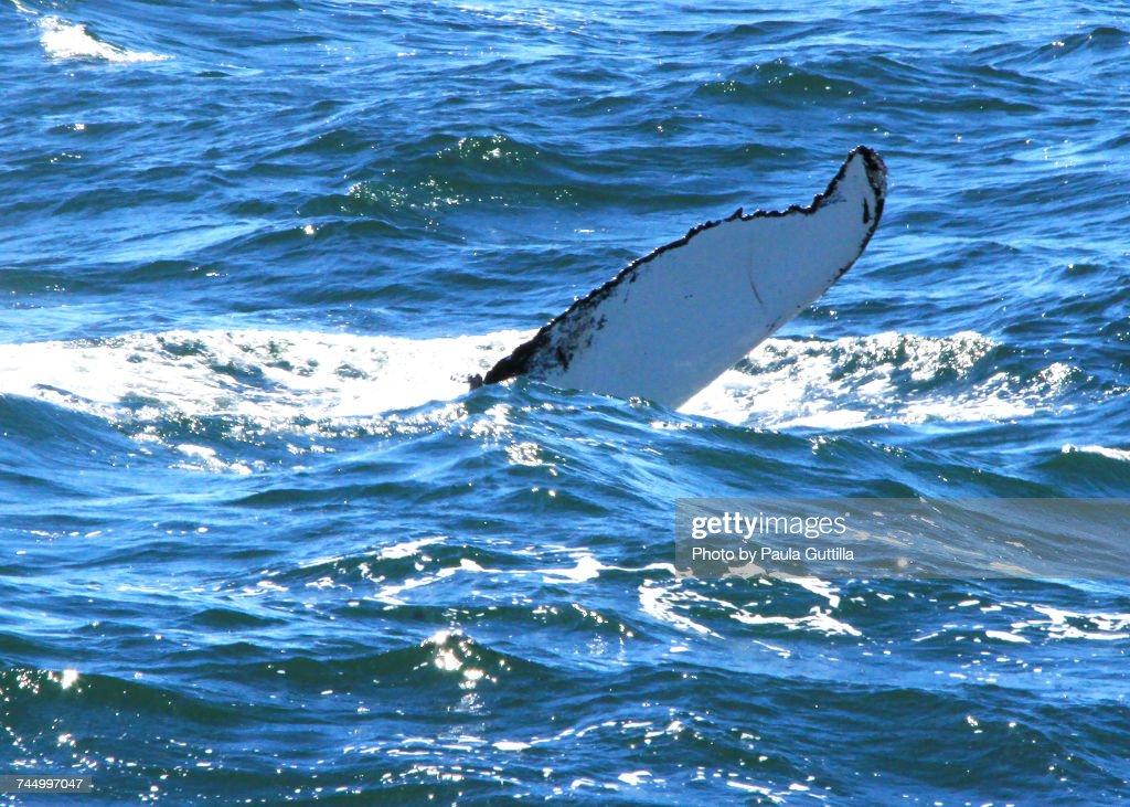 Aquatic Animals  : Stock Photo