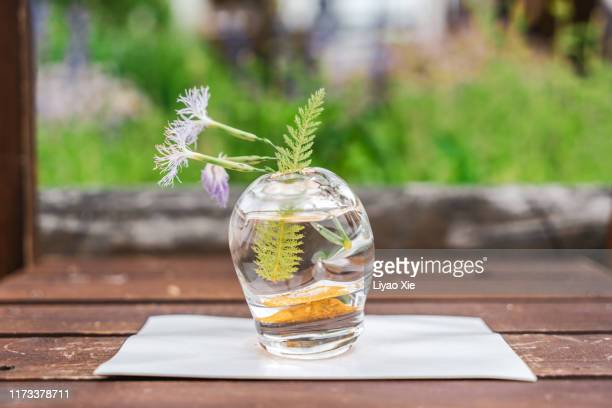 aquatic plant bonsai - liyao xie stock pictures, royalty-free photos & images