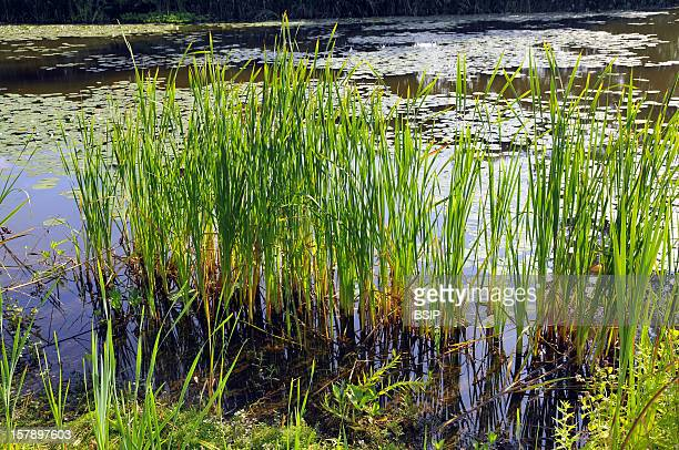 Aquatic Plants Aquatic Plants
