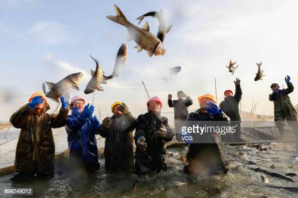 Aquatic product farmers net fish at Maoer Lake in Xuyi County on December 28 2017 in Huaian Jiangsu Province of China Water product farmers in Xuyi...