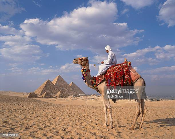 arab on camel at the pyramids near cairo - hugh sitton stock pictures, royalty-free photos & images