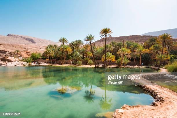 arabia, sultanate of oman, palms in wadi bani khalid - oman fotografías e imágenes de stock