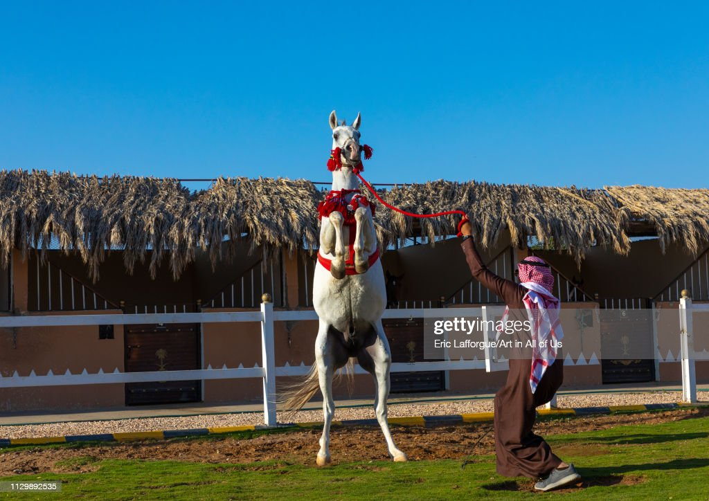 Arabian Horse Rearing Up In Alhazm Stud Najran Province Khubash News Photo Getty Images