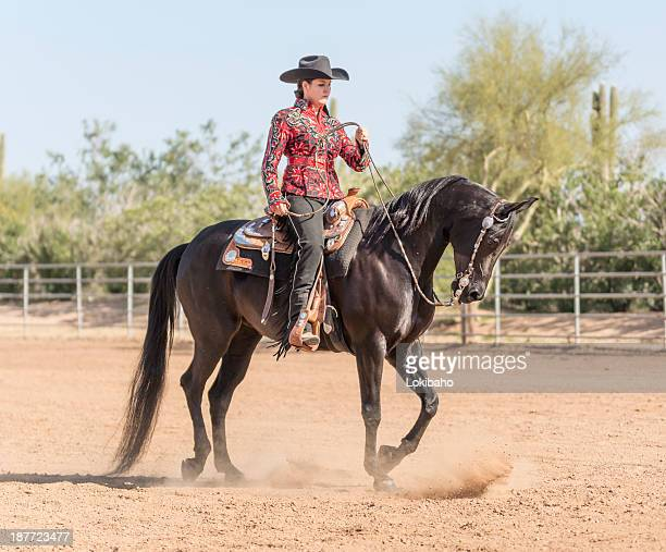 Arabian Horse with rider dressed for Show