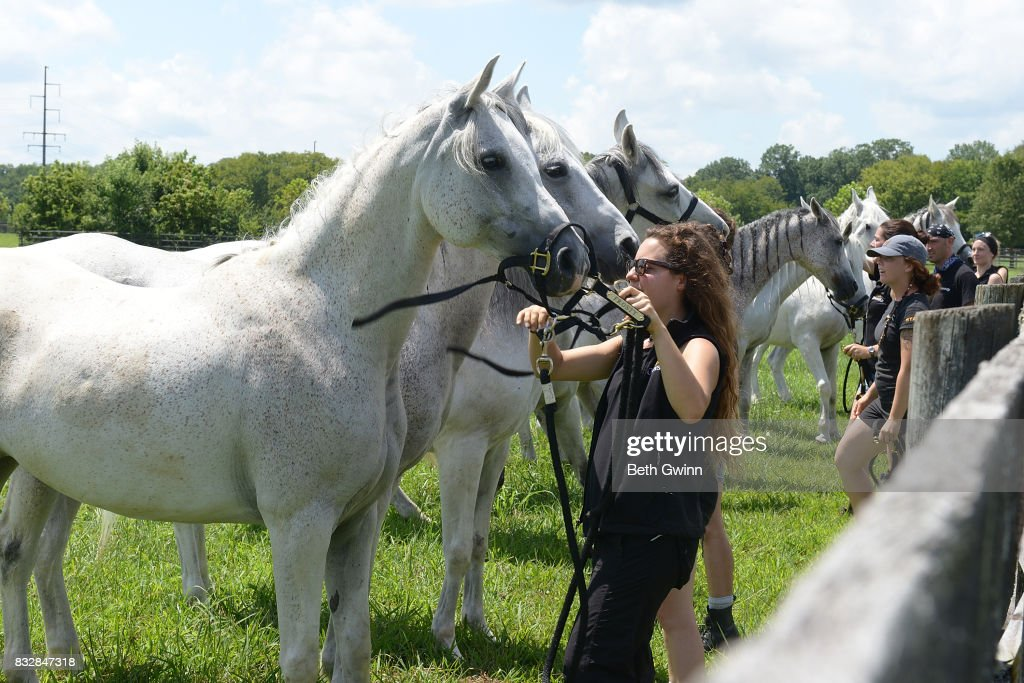 Arabian Horses for Cavalia Odysseo on August 16, 2017 in Franklin, Tennessee.