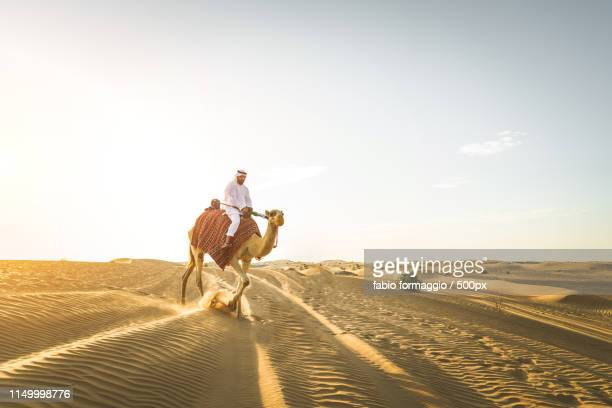 arabian man with camel in the desert - uae heritage stock photos and pictures