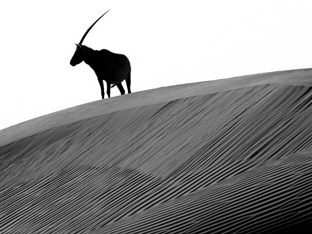 Arabian oryx and the myth of the Unicorn
