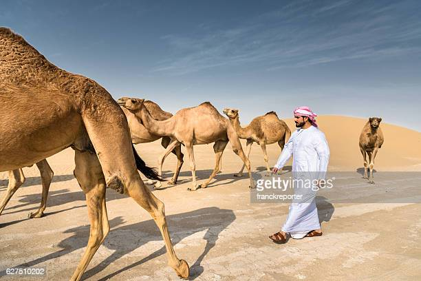 arabic sheik on the desert walking with the camel - qatar fotografías e imágenes de stock