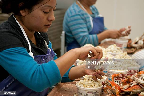 Araceli Barrera and her sister Eva Barrera join other women picking hundreds of pounds of crabs at a crab facility on July 22 2010 in Fishing Creek...
