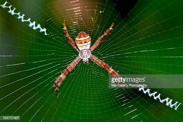 Arachnida, Spider, Macro