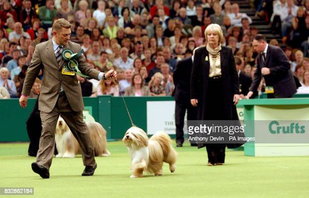 Araki Fabulous Willy a Tibetan Terrier is judged by Zena ThornAndrews before being named as Best In Show at Crufts 2007 at the NEC in Birmingham