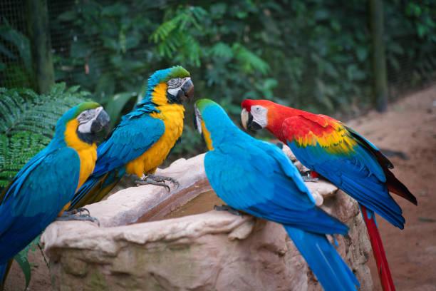 Araras at Bird's Park