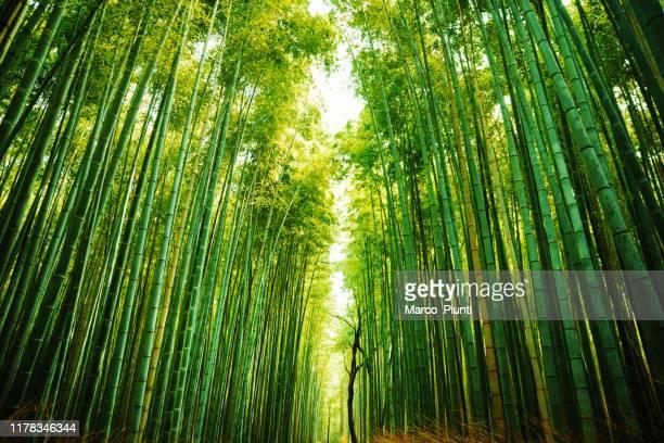 bosque de bambú de arashiyama en kioto, japón - paisajes de japon fotografías e imágenes de stock