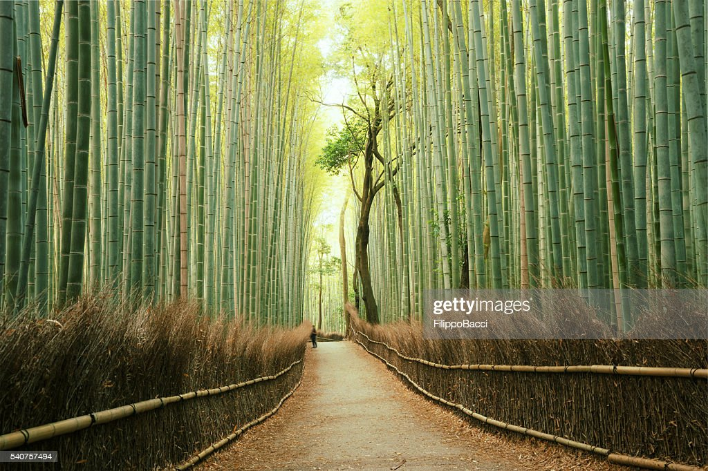 Arashiyama Bamboo Forest in Kyoto, Japan : Stock Photo