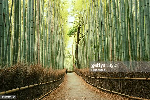 arashiyama bamboo forest in kyoto, japan - japan stockfoto's en -beelden