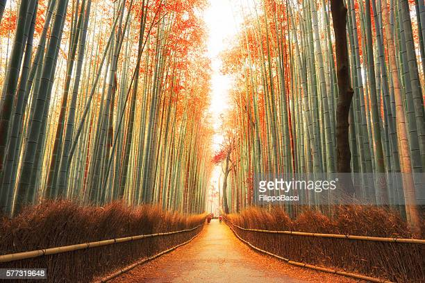 arashiyama bamboo forest in kyoto, japan - japan stock pictures, royalty-free photos & images