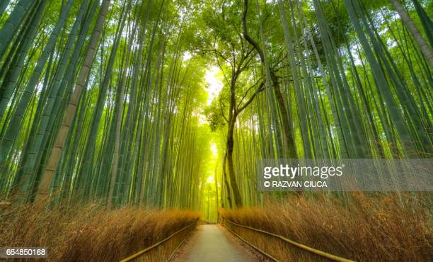 arashiyama bamboo forest - kyoto prefecture stock pictures, royalty-free photos & images