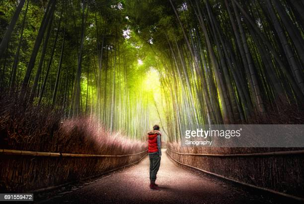 arashiyama bamboo forest - bamboo forest stock photos and pictures