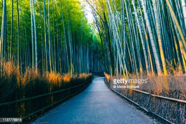 arashiyama bamboo grove, kyoto, japan - arashiyama stock pictures, royalty-free photos & images