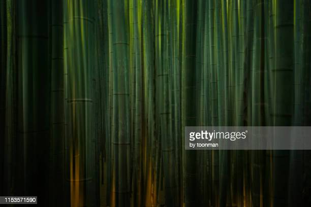 arashiyama bamboo grove, kyoto - 竹 ストックフォトと画像