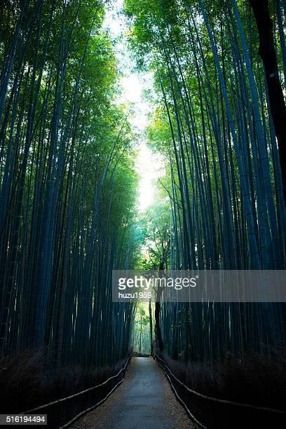 Arashiyama Bamboo Path