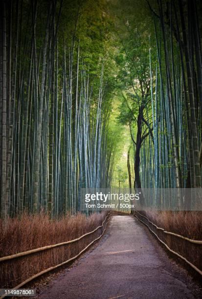 arashiyama path of bamboo - arashiyama stock pictures, royalty-free photos & images