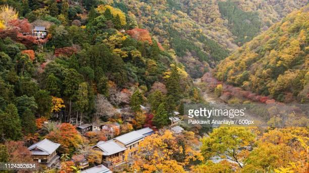 arashiyama valley at peak fall colors - 八幡平市 ストックフォトと画像