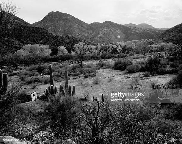 Aravaipa Canyon in the Sonoran Desert of Southern Arizona was the scene of a brutal 1871 massacre of Apache women and children who were attacked by...