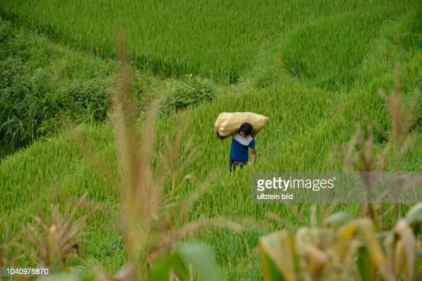 Arbeit Reisterrasse Tha Pin Vietnam